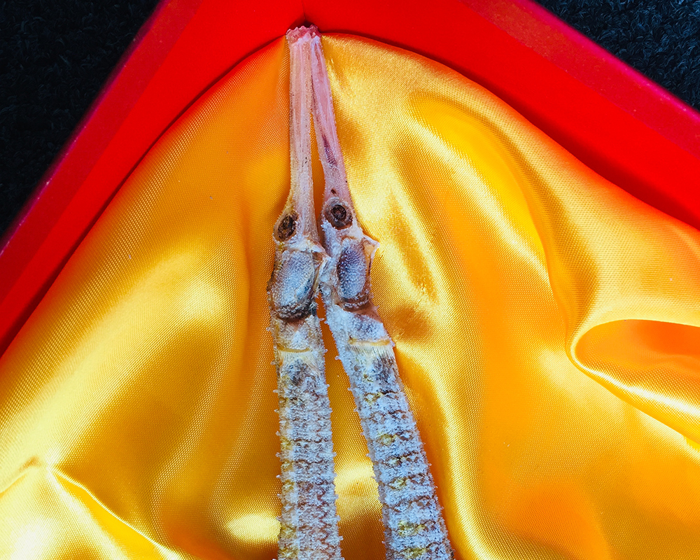 New Zealand sea dragons